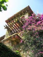 fiori nel muro