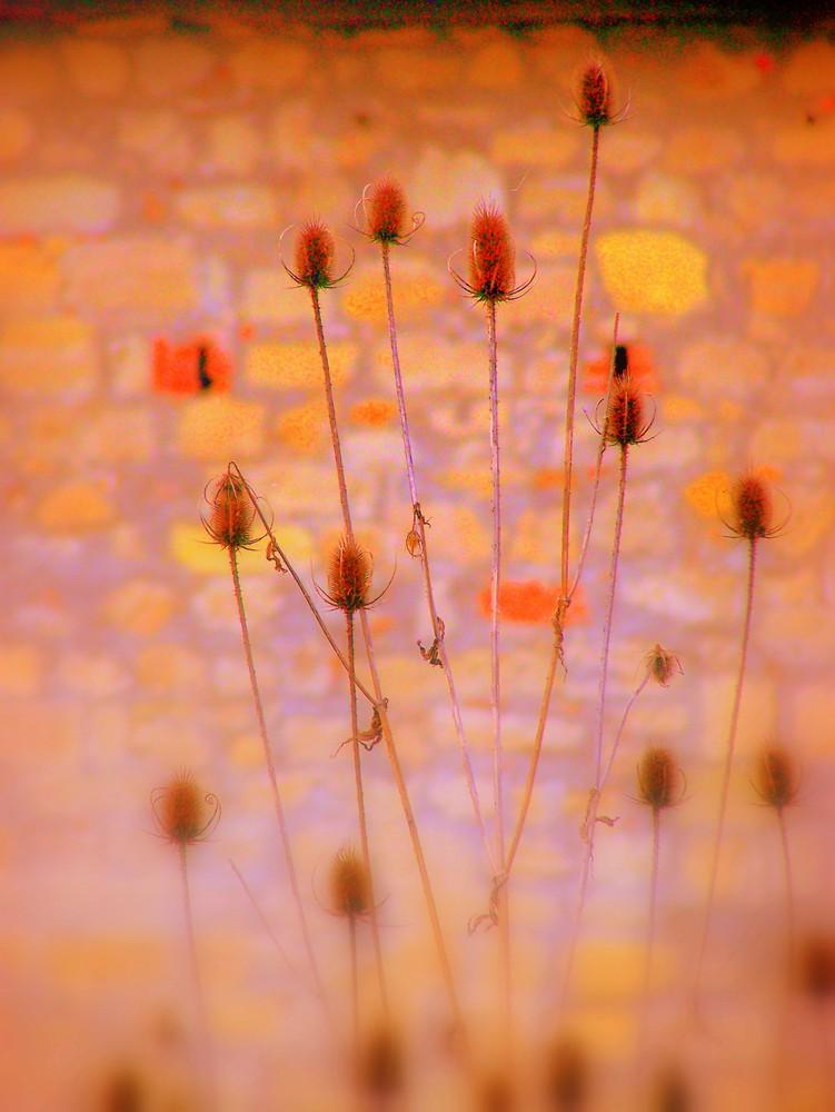 fiori secchi contrapposti a muro di mattoni