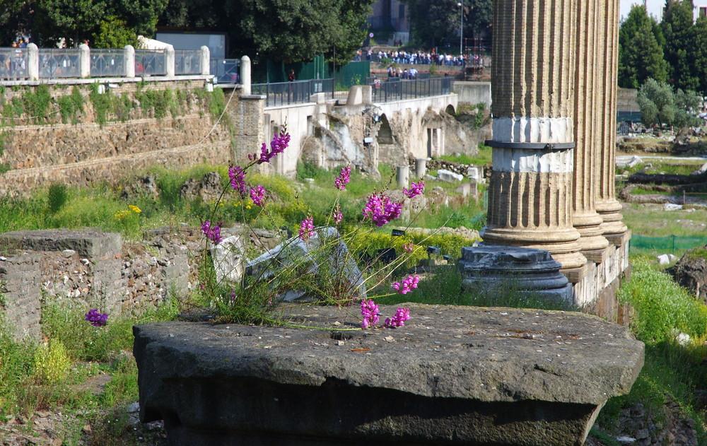 fiori tra le rovine di roma