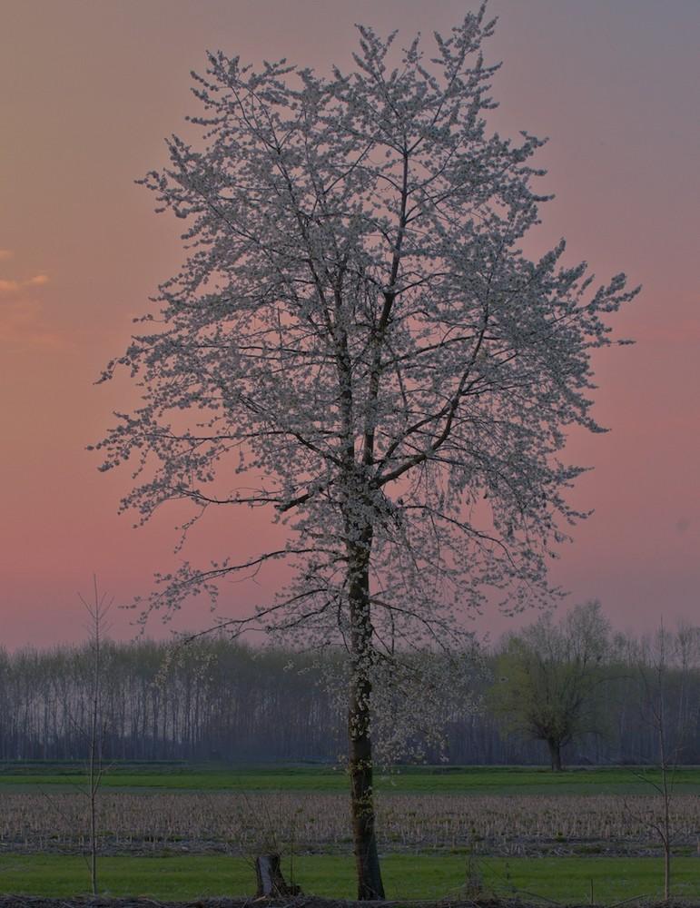 Fioritura al tramonto