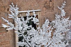 Fioritura di neve...