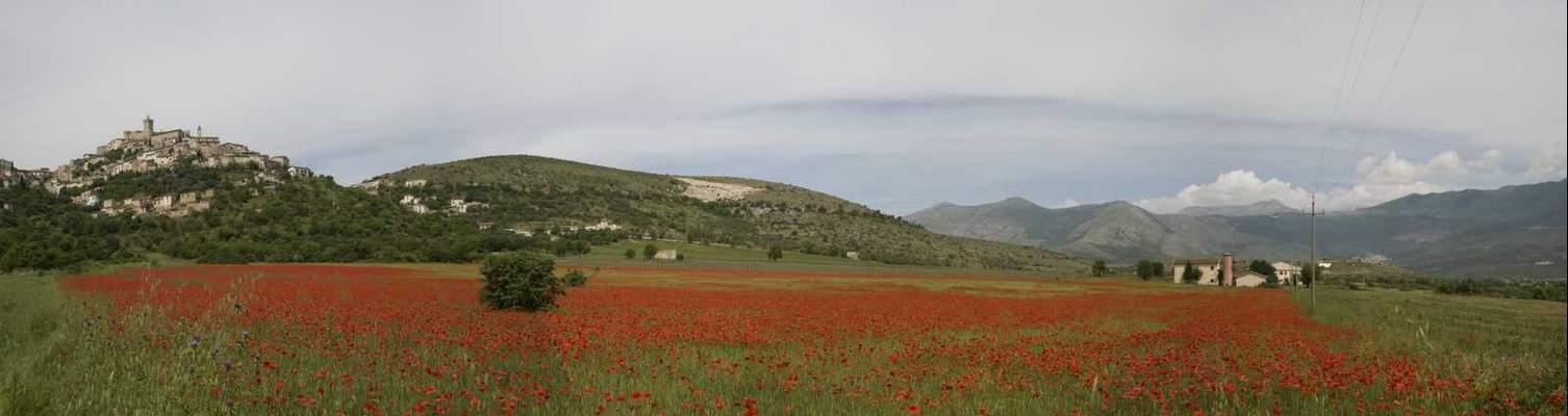 Fioritura papaveri 2010 - Capestrano (Abruzzo)