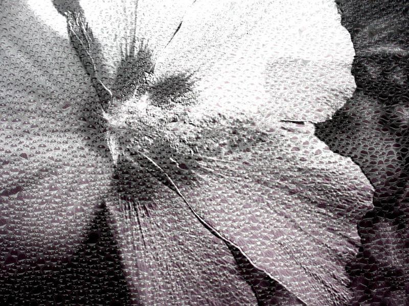 Fiorrugiada