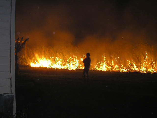 Fire in the night: cane harvest 1