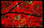 fire-red autumn