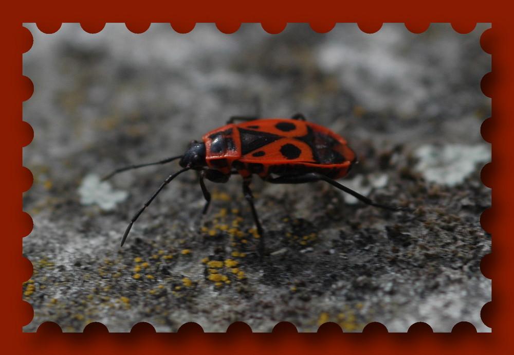 Firebug ;o)