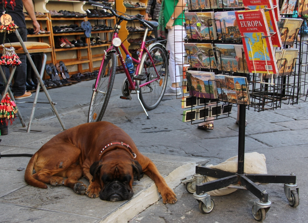 Firenze - Hund in Europa