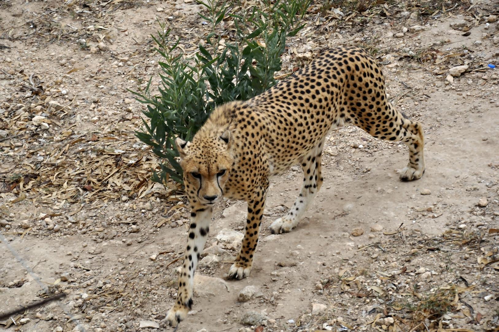 Firguia Tierpark