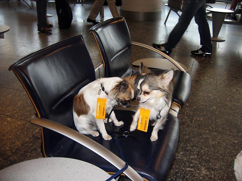first class dogs