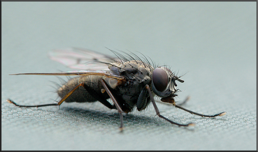 First Fly 2011