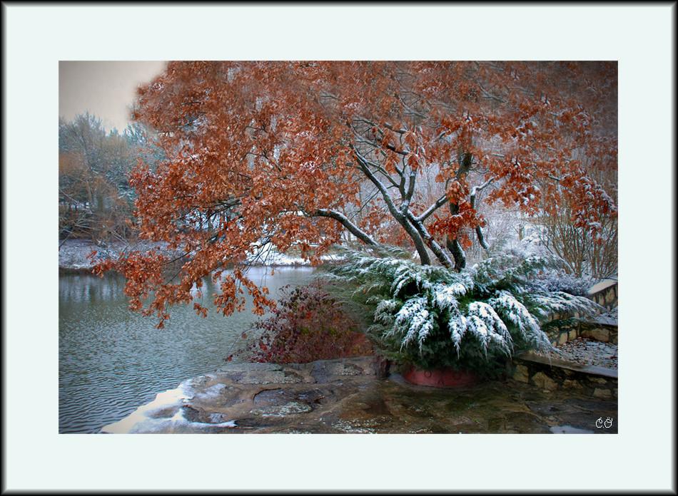 First Snow....