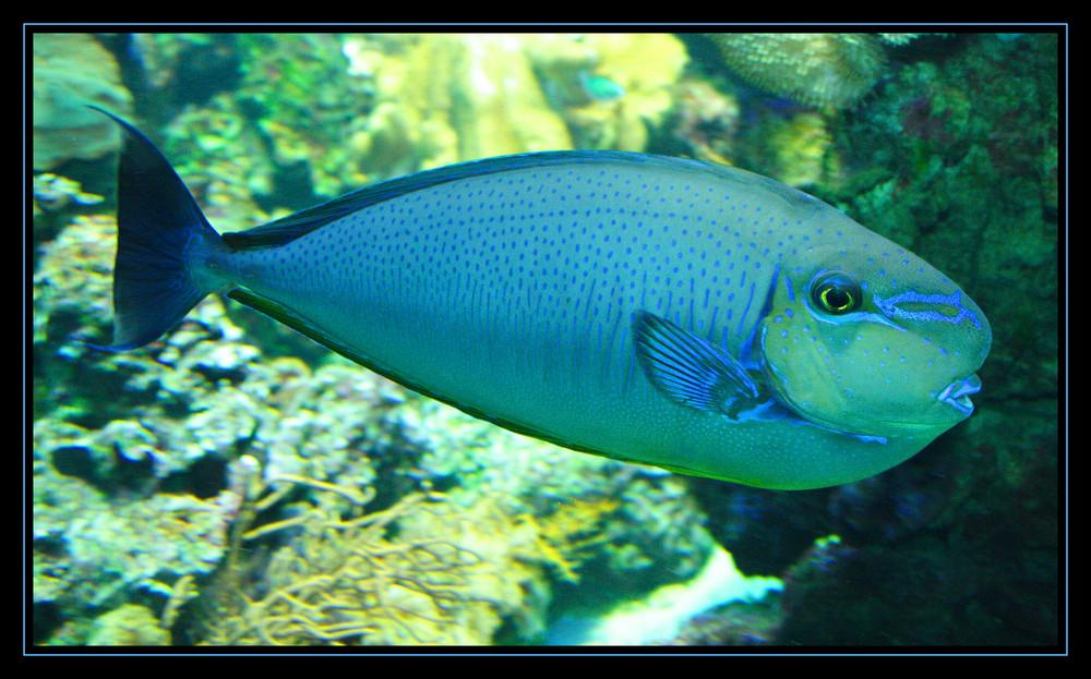 Fisch #1