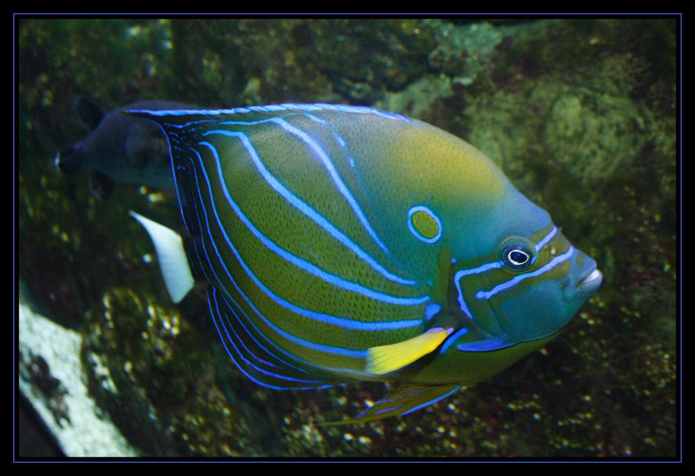 Fisch #2