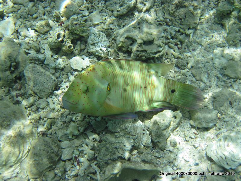 Fisch 2 im Roten Meer