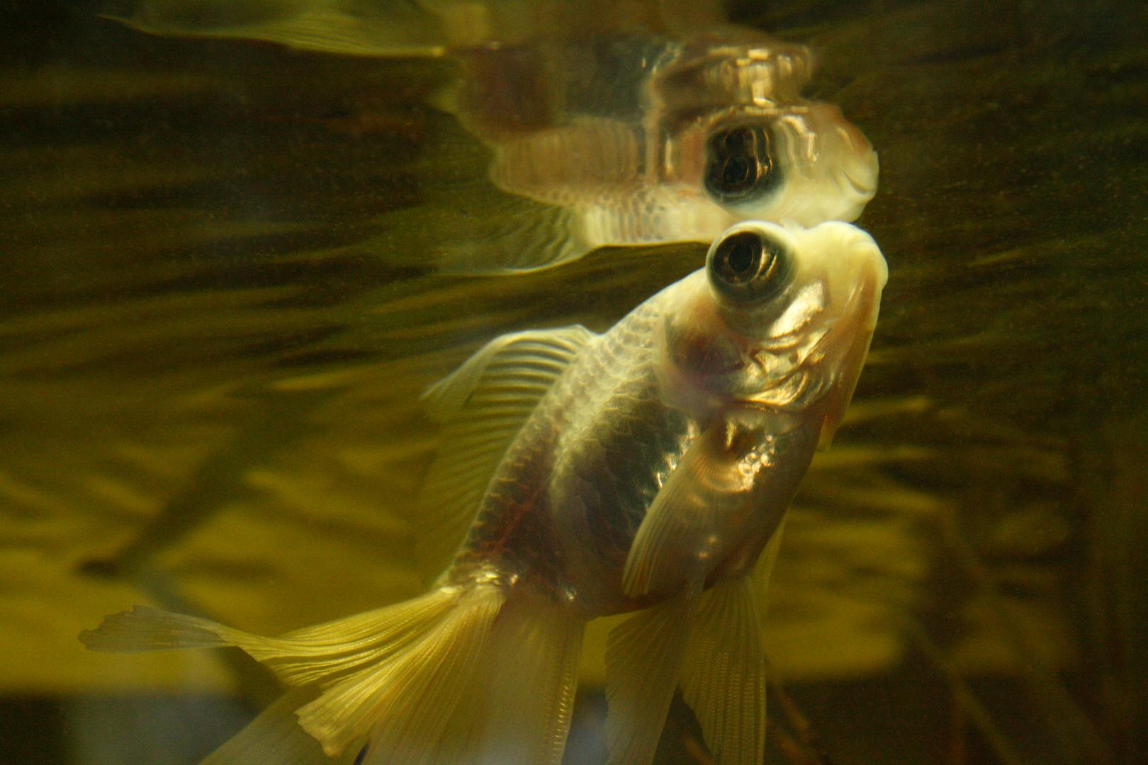 ...Fisch...