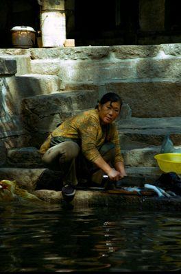Fisch asiatisch