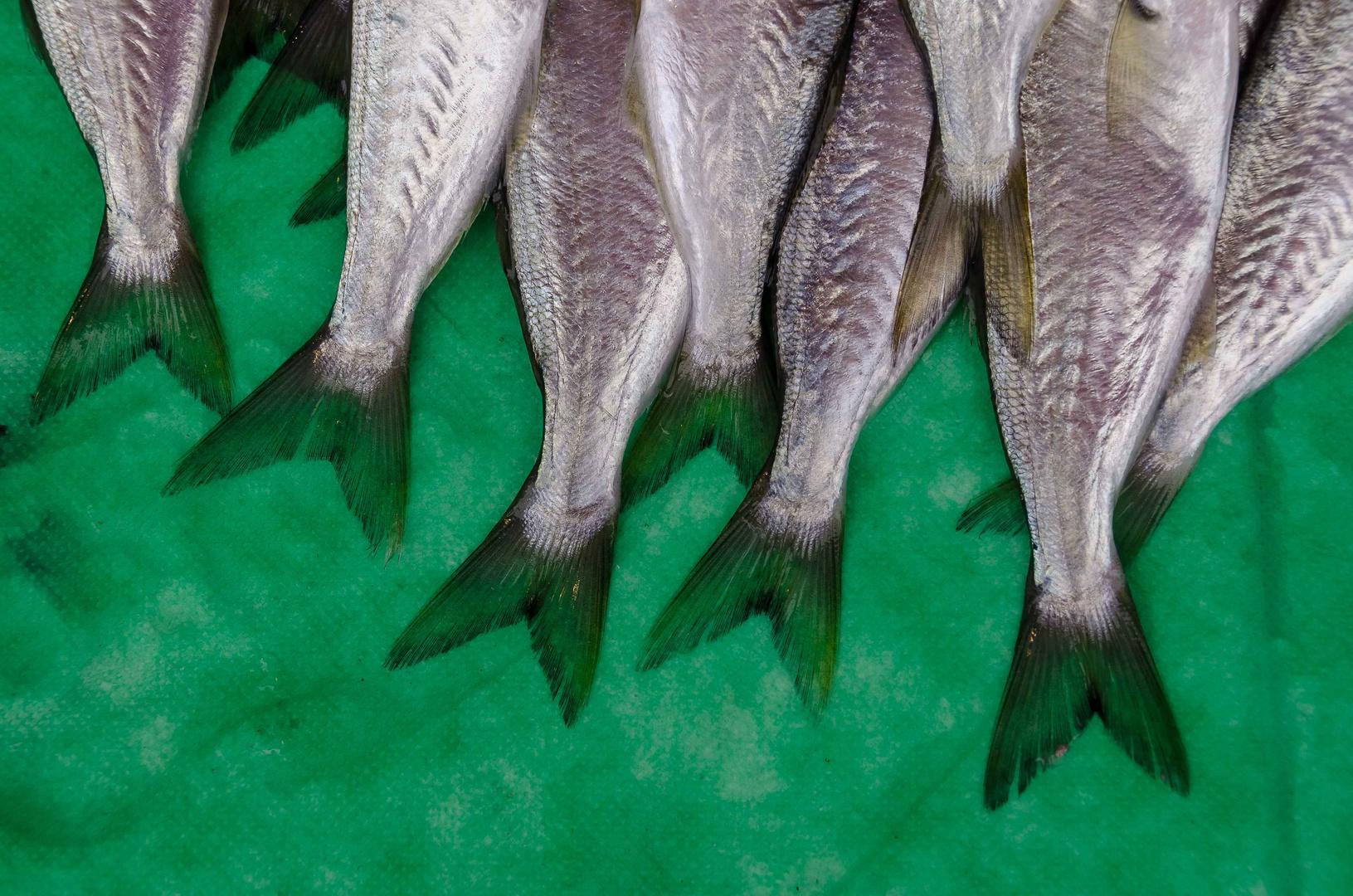 Fisch auf Grün