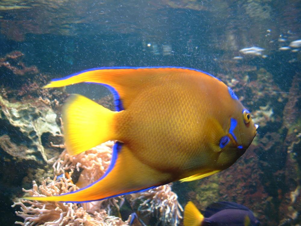 Fisch foto bild tiere zoo wildpark falknerei zoo for Fisch bilder