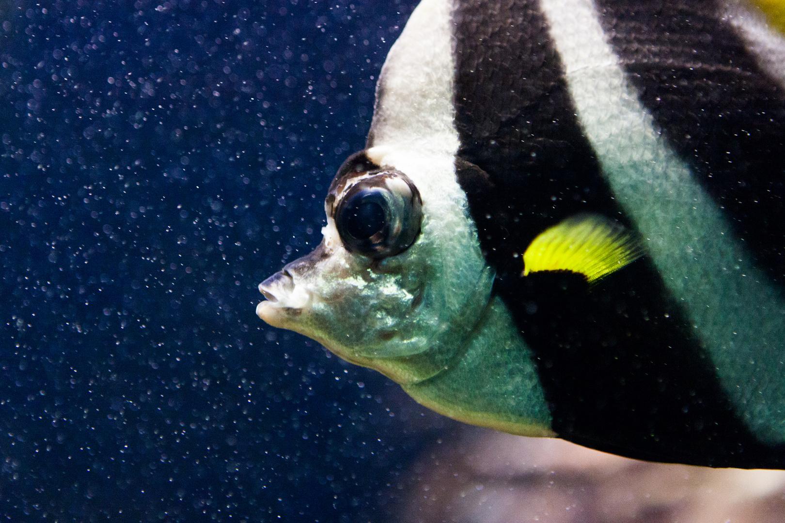 Fisch :-)