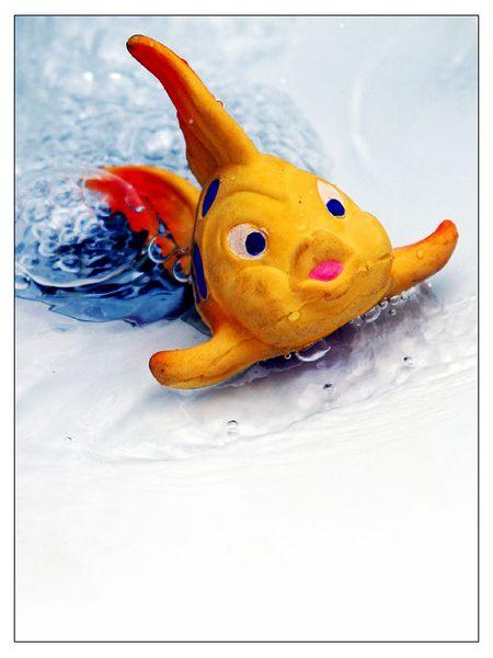 ...Fisch im Waschbecken...