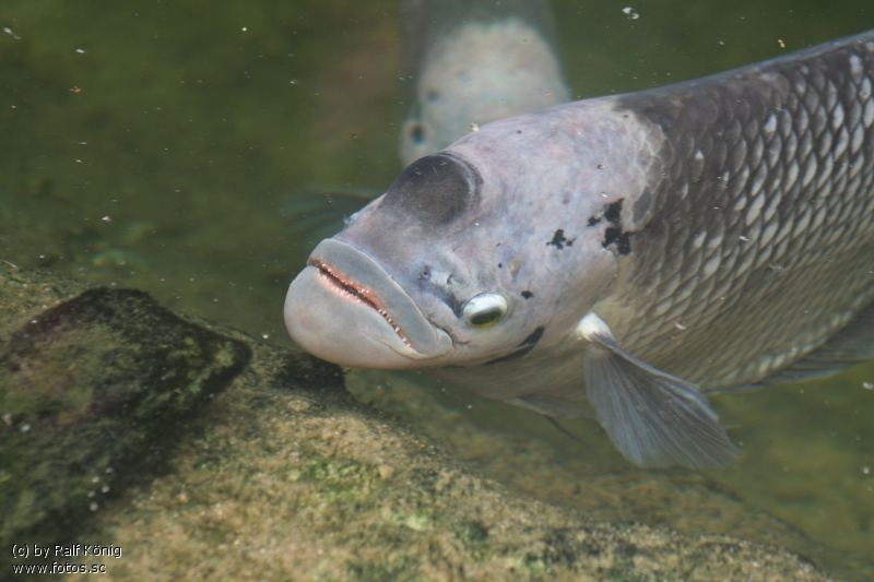 Fisch im Wasser