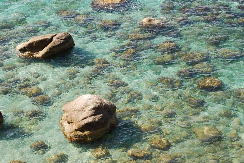 Fisch oder Felsen?