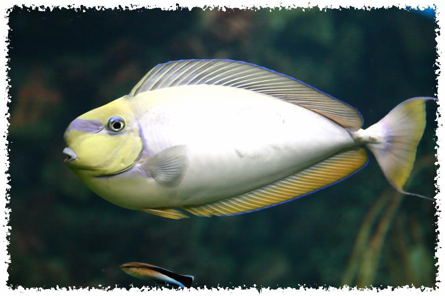 Fisch (oder so)
