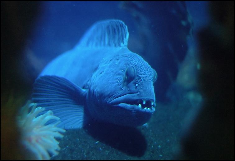 Fisch - Sea Life - Oberhausen