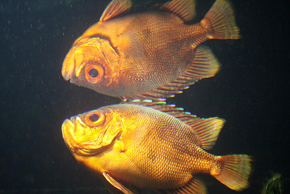 Fisch-Spiegelung