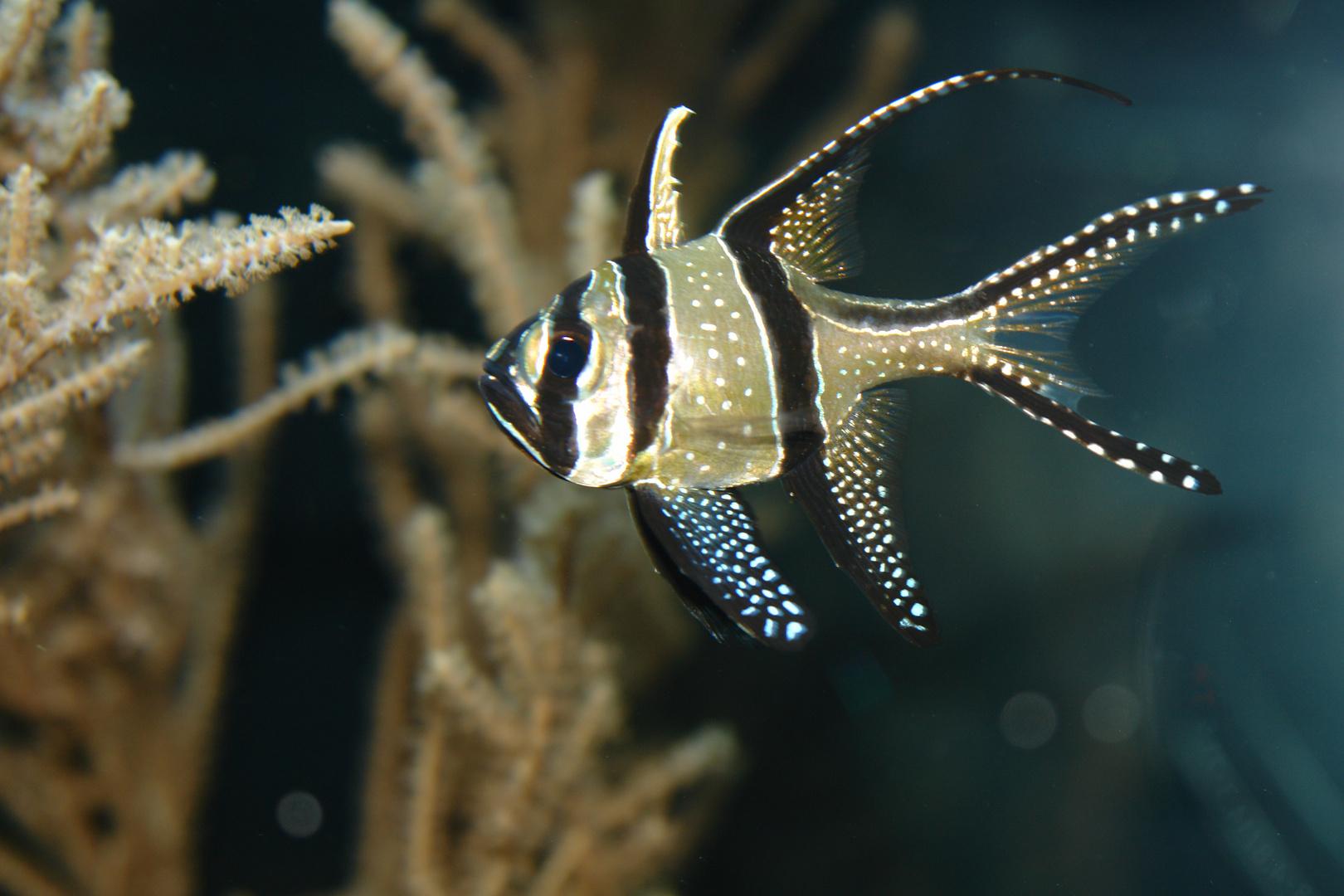 Fisch TP Hellabrunn
