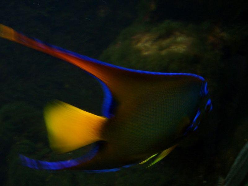Fisch Wilhelma Stuttgart