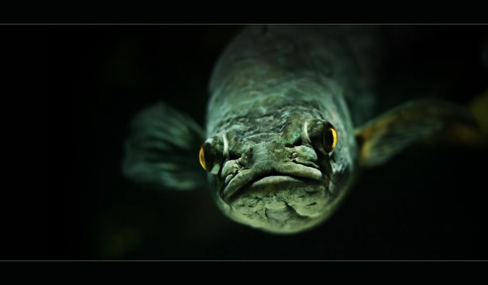 Fisch_1