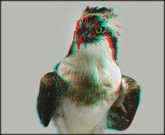 Fischadler (3D)