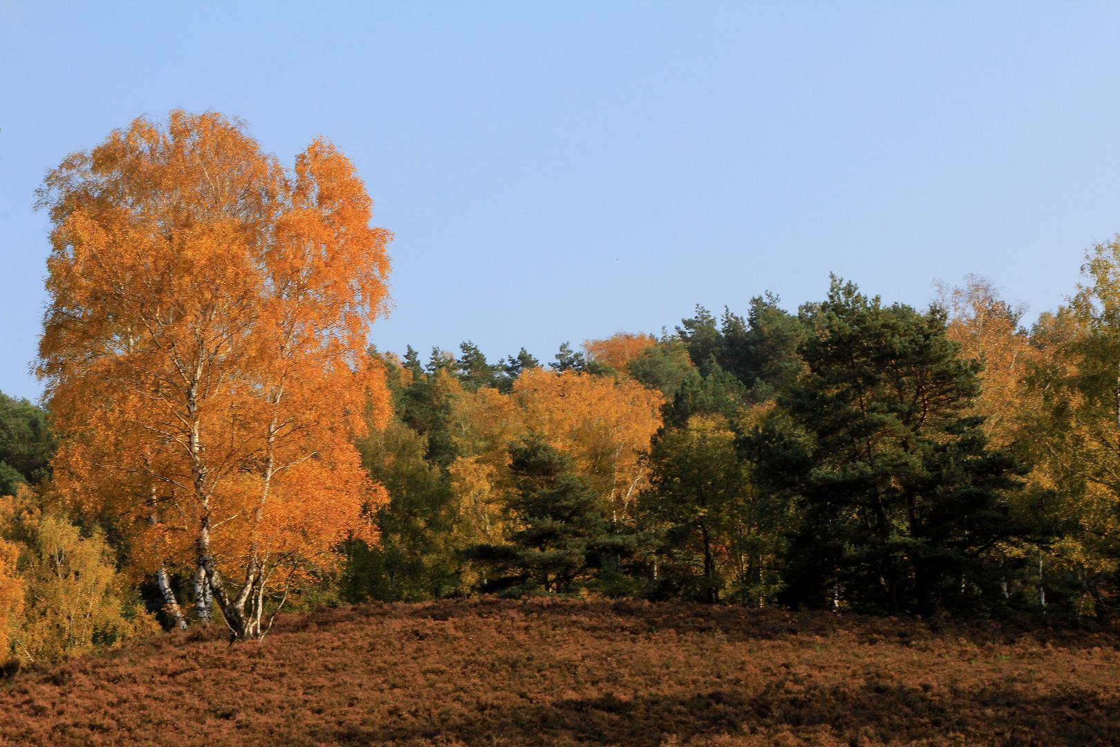 Fischbeker Heide im Herbst...