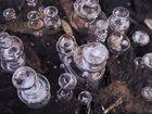 Fischblasen im Eis