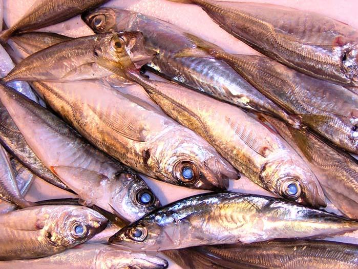 Fische 1