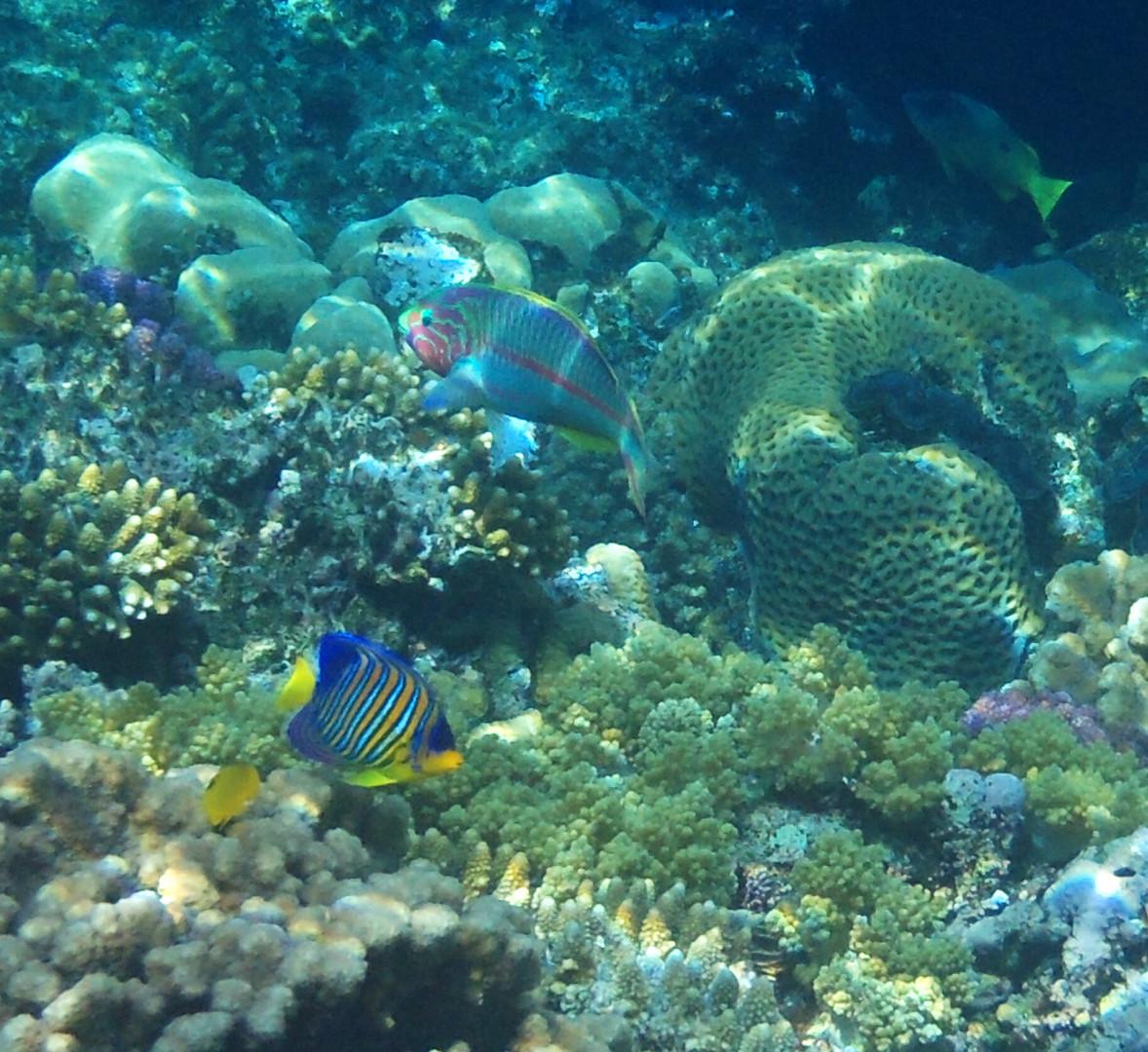 Fische Ägypten 2013