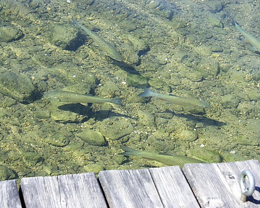 Fische beim Sonnenbad