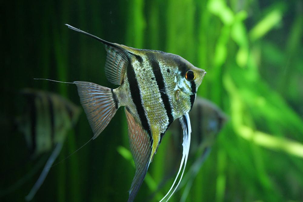 Fische die stillhalten