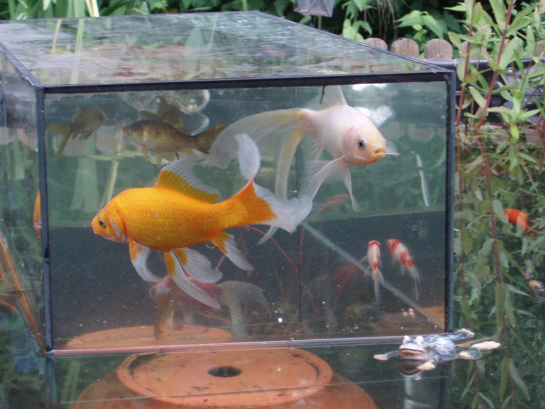 Fische im aussichtsturm 02 foto bild natur kreativ for Aquarium im teich
