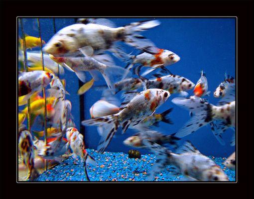 Fische im Baumarkt