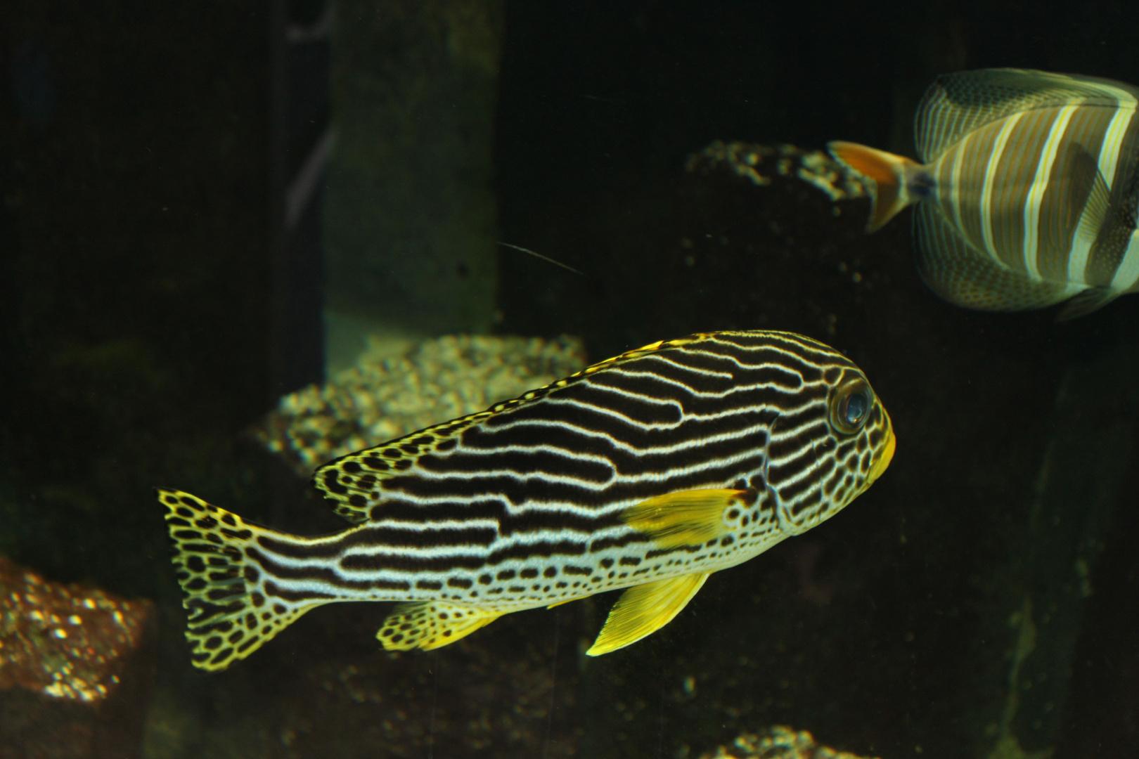 Fische im Dunkeln