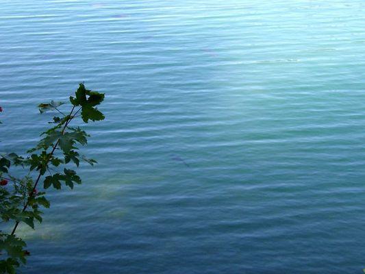 Fische im See ???