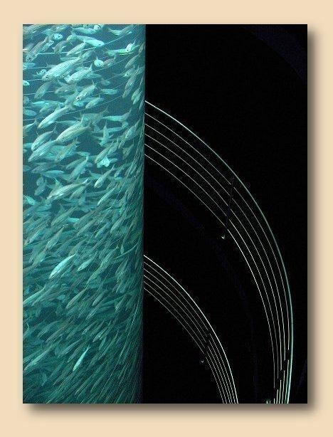 Fische in der Röhre mit Treppengeländer