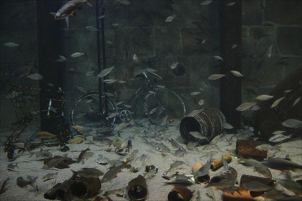 Fische können nicht ...