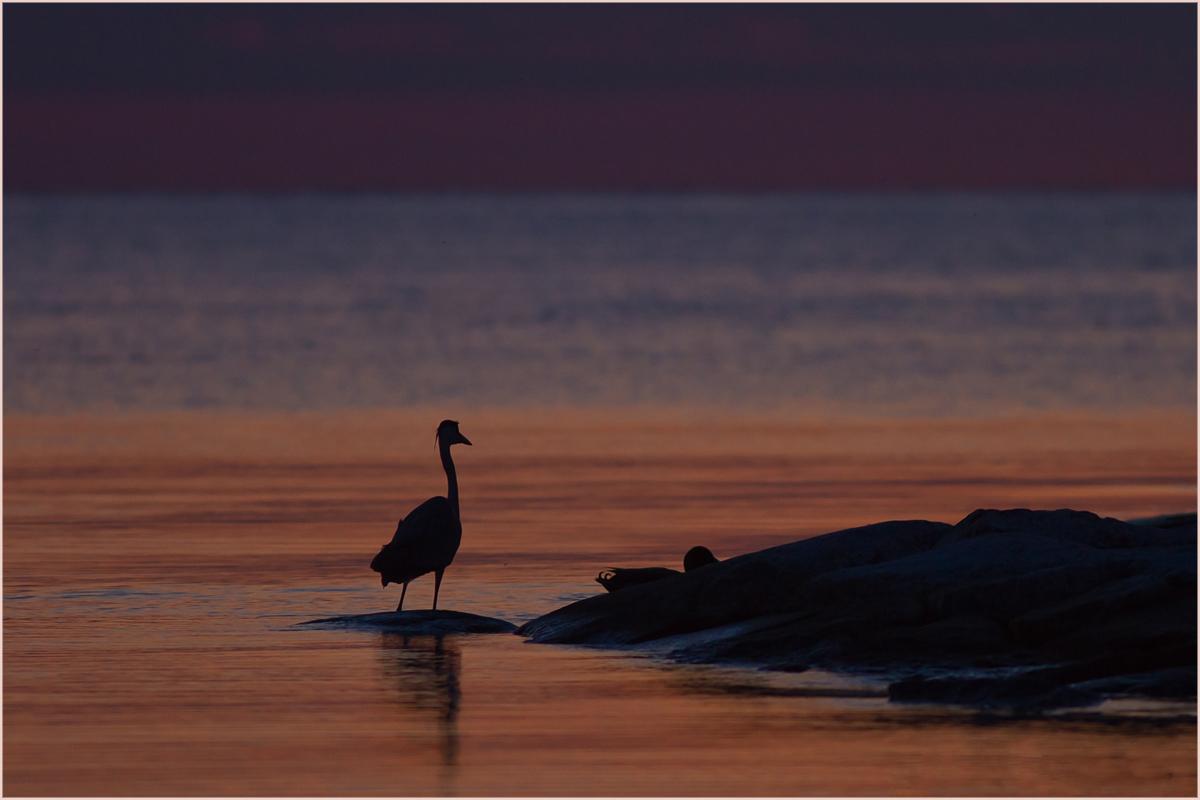 Fischen nach Sonnenuntergang