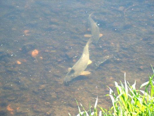 Fischen ohne Angel :-)