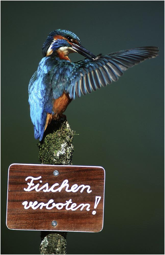 Fischen Verboten?! von Erich Kuchling
