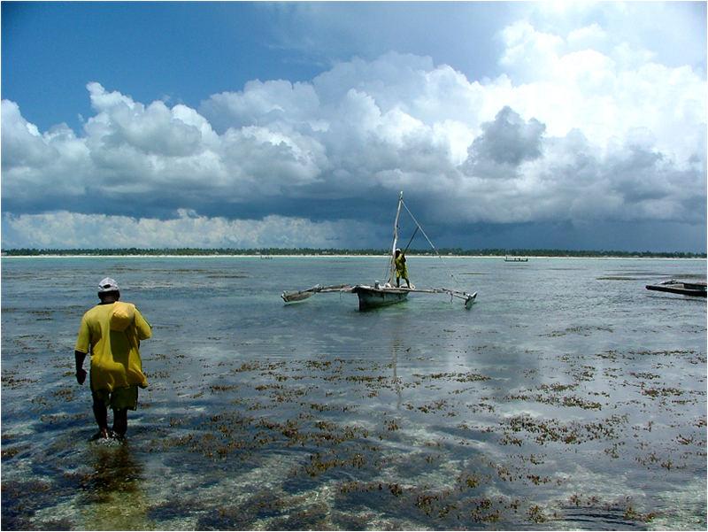Fischer am Korallenriff