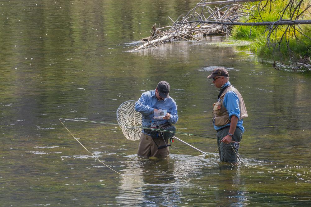 Fischer im Yellowstone